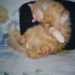 Très confortable !