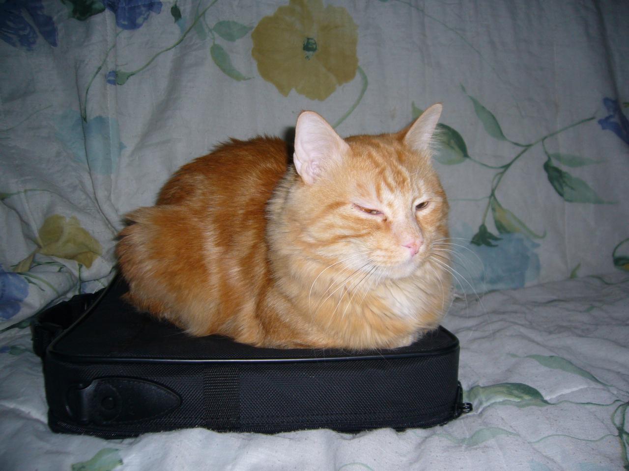 Une sacoche de portable, quel bon matelas !