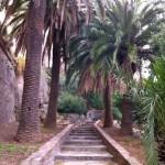 Un escalier qui grime au milieu des palmiers